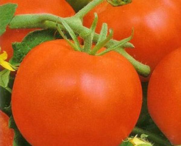 Mobil Tomato Seeds