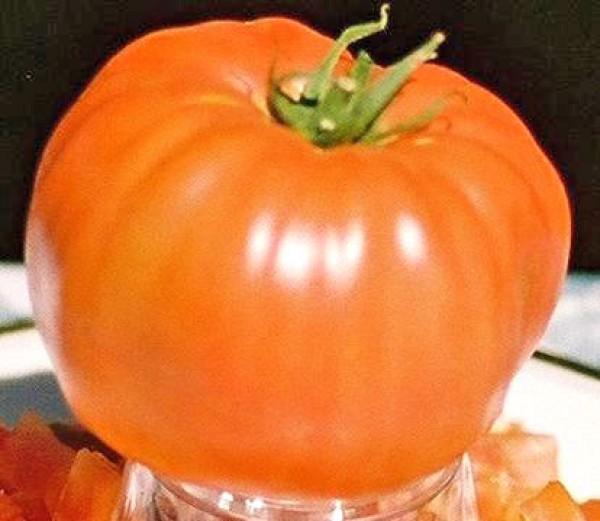 Soldacki Tomato Seeds