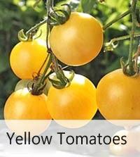 200 Seeds Sweet Aperitif Gourmet Tomato