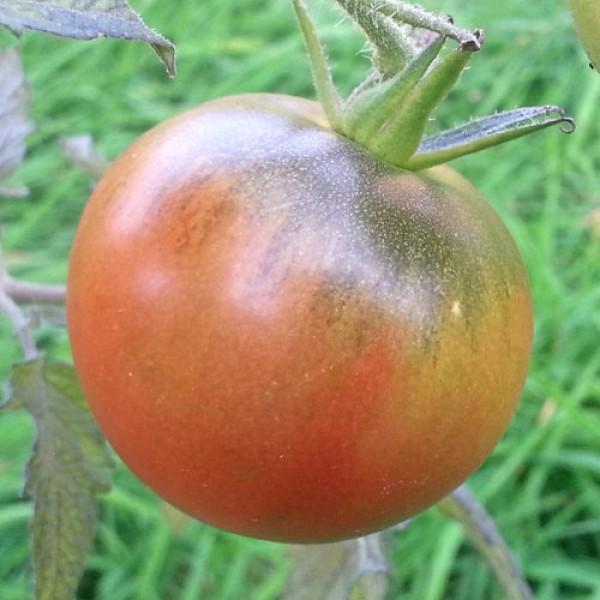 Purple Cherokee Tomato Seeds