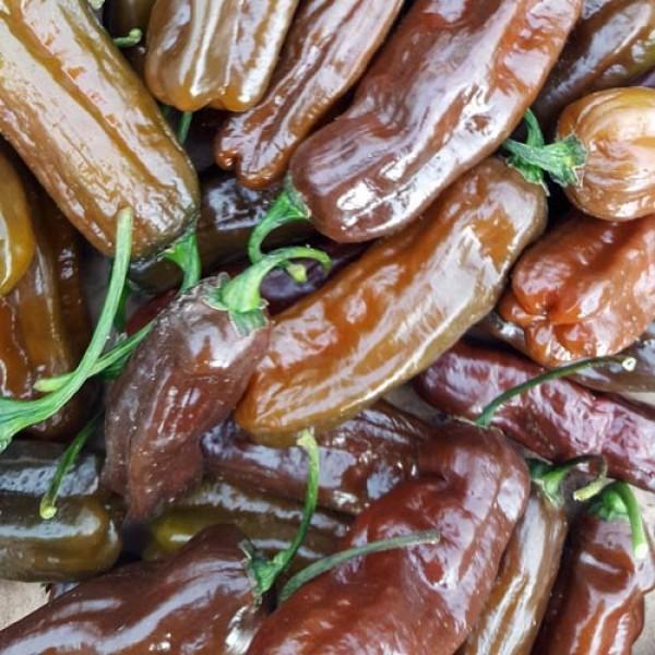 Habanero Chocolate Long Chili Seeds