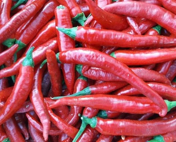 Fuego Chili Seeds