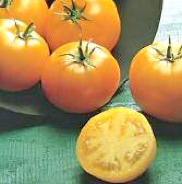 Golden Sunray Tomato Seeds