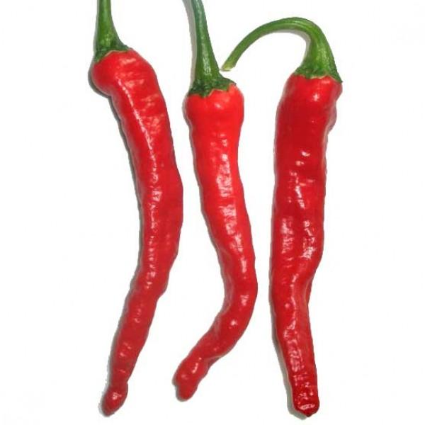 Kashmir Chili Seeds