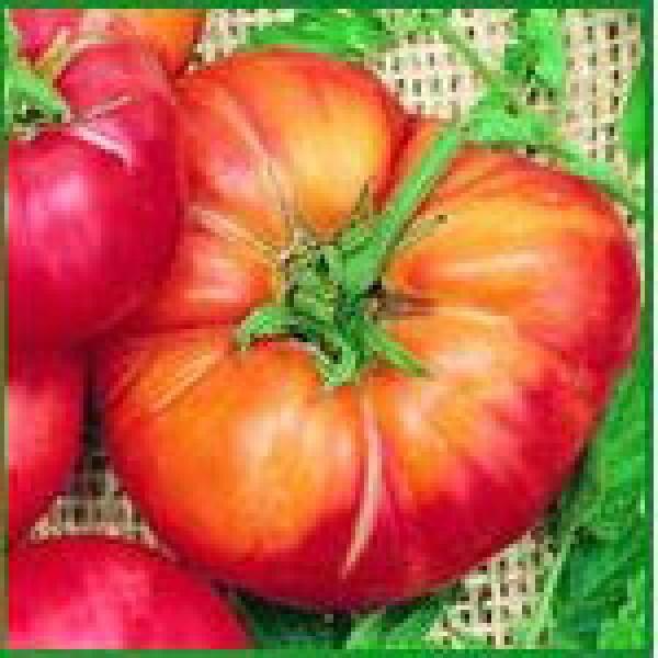 Mr.Stripey Beefsteak Tomato Seeds