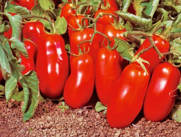 San Marzano Nano Tomato Seeds