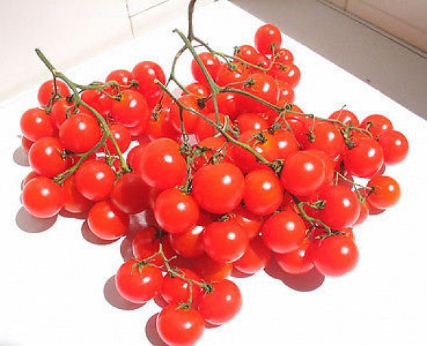Riesentraube Tomato Seeds