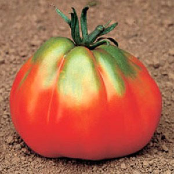 Giant Pear Red Tomato Seeds