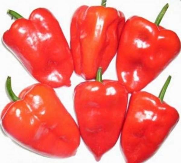 Ancho Grande Poblano Chili Seeds