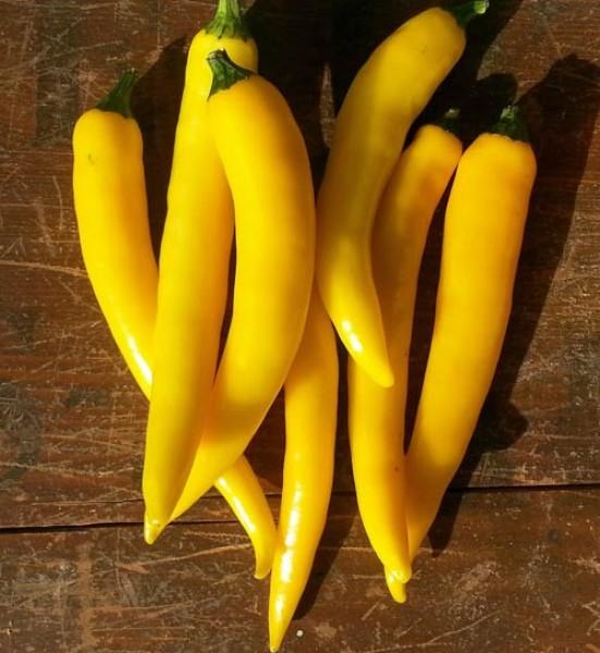 Cayenne Yellow Chili Seeds