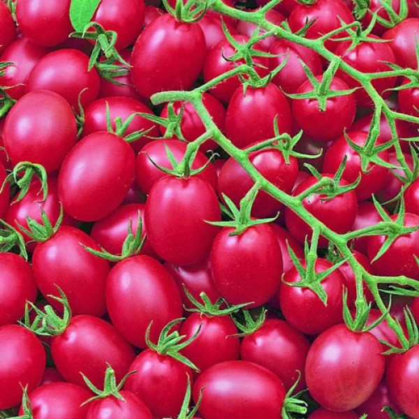 Pink Grape Tomato Seeds