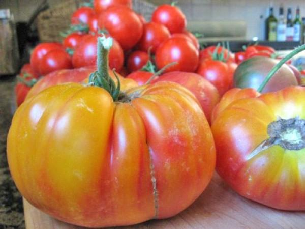 Flame Tomato Seeds