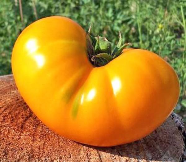 Azoychka Tomato Seeds