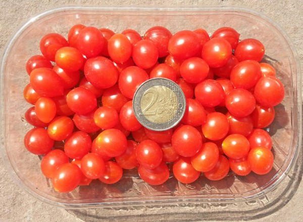 Currant Tomato Seeds - red