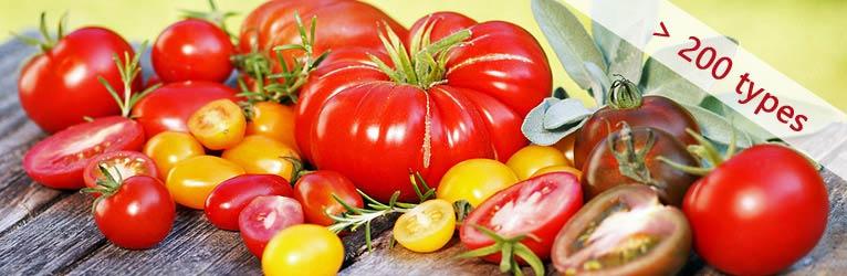 Tomaten_Kategorie_200_e