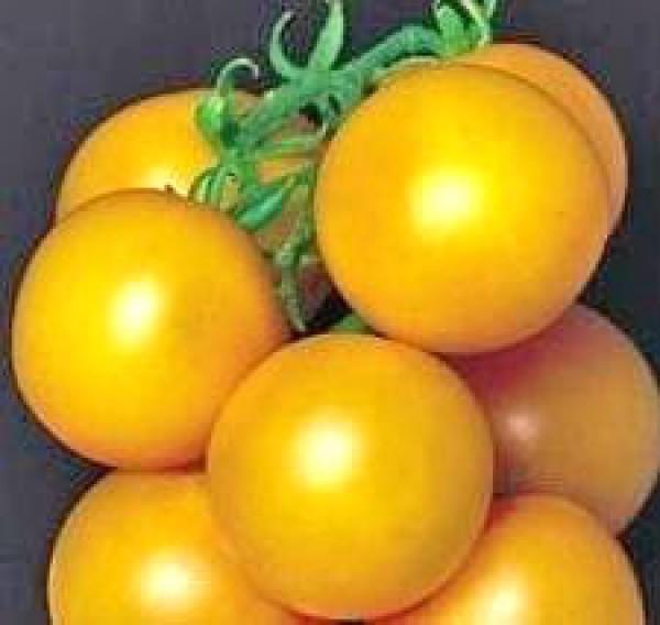 Ponderosa Yellow Tomato Seeds