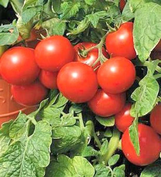 Large Cherry Tomato Seeds