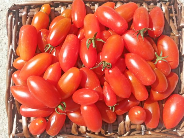 San Marzano Mini Tomato Seeds