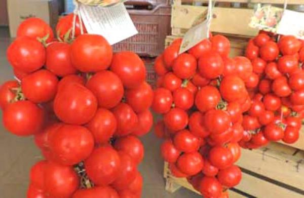 Regina Tomato Seeds