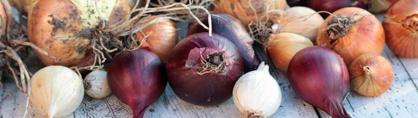Onion & Leek