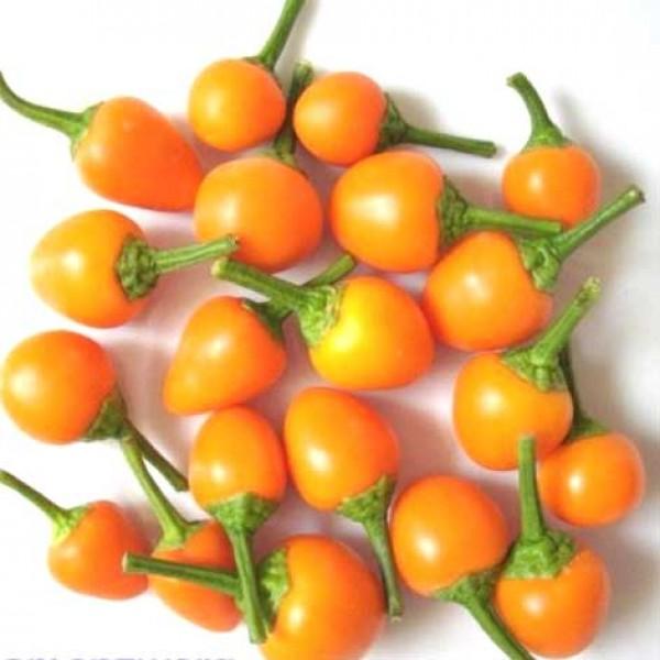 Pis Bas Harari Chili Seeds