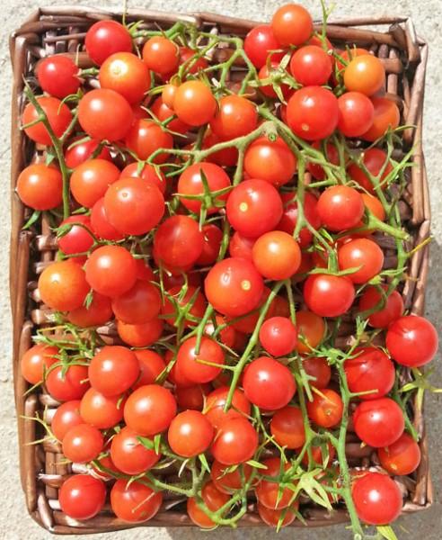 Drops Tomato Seeds
