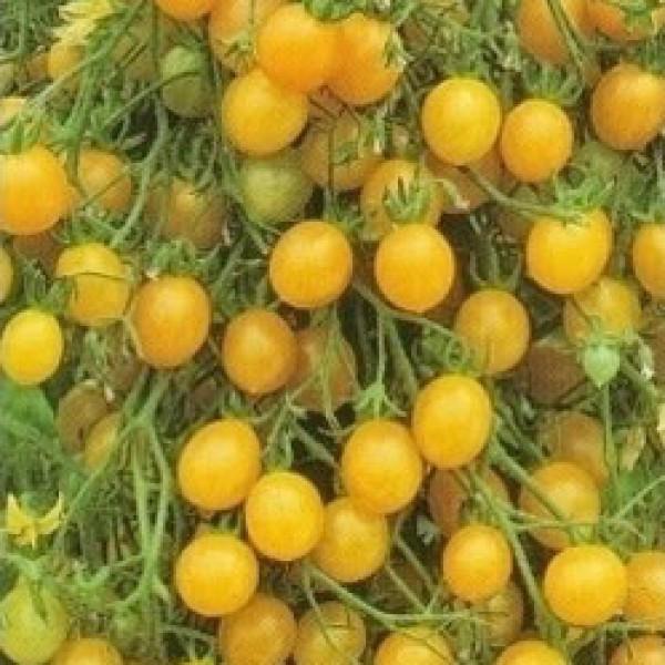 Tondino Giallo Tomato Seeds