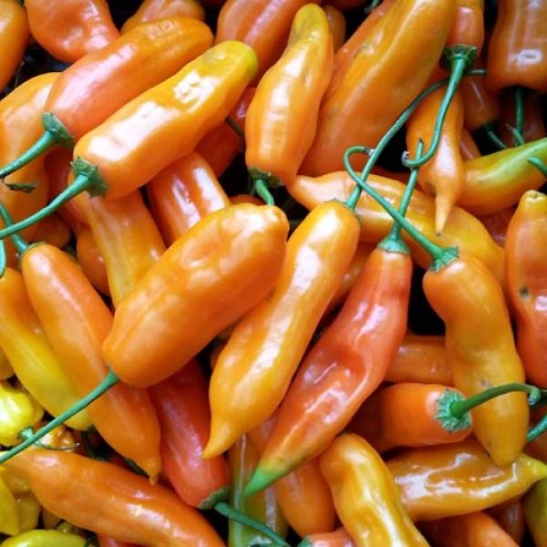 Aji Amarillo Chili Seeds