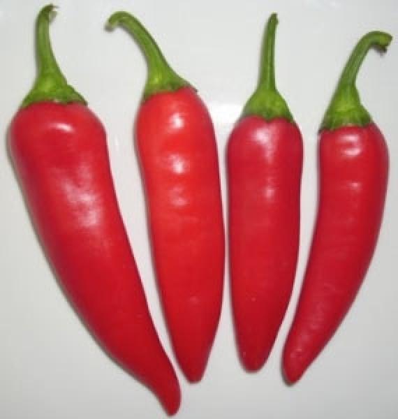 Guindilla Roja Chili Seeds