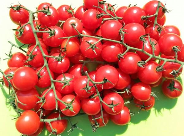 Juanita Tomaten Samen