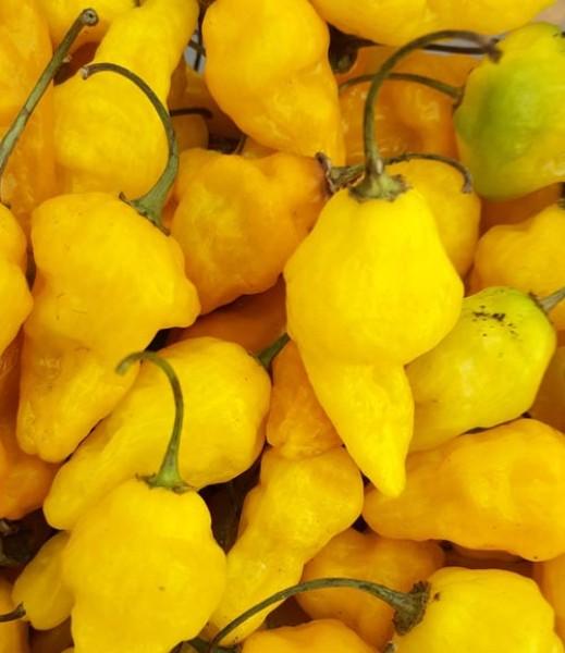 Aji Limo Chili Seeds