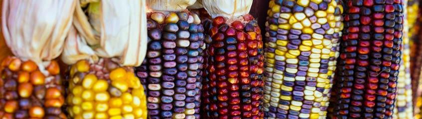 Corn & Cereals