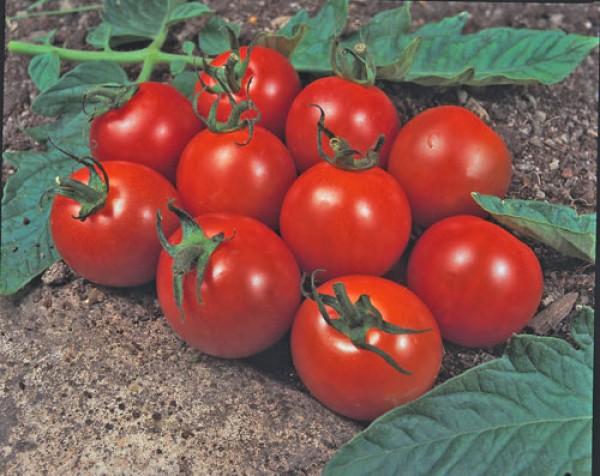 Alicante Tomato Seeds