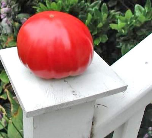 Gigante Johnson Tomato Seeds