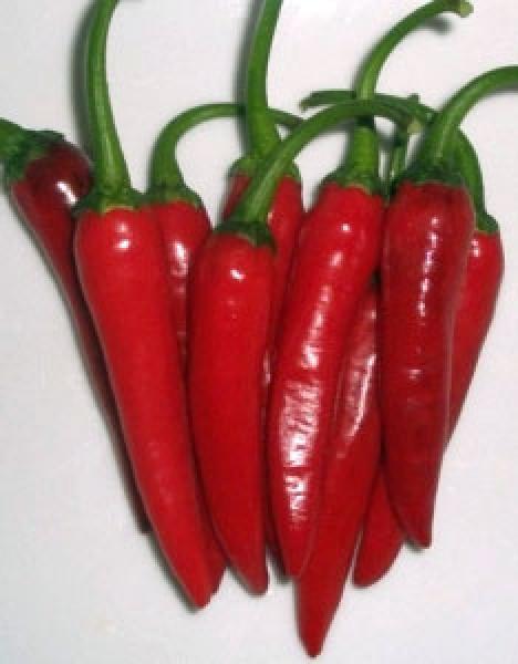 Suryamukushi Chili Seeds