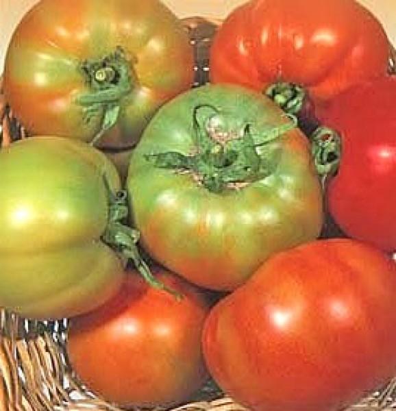 Licatese Tomato Seeds