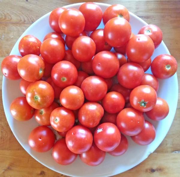 Camone Tomato Seeds