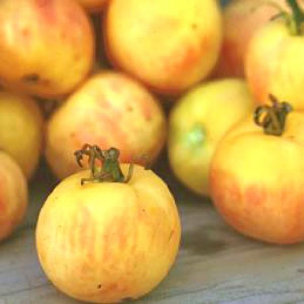 Order online Garden peach tomato seeds chili shop24com